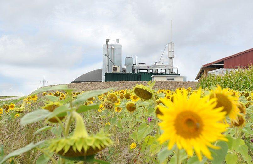Güllewerk Flex in Hellmitzheim, Iphofen, Deutschland mit Sonnenblumen
